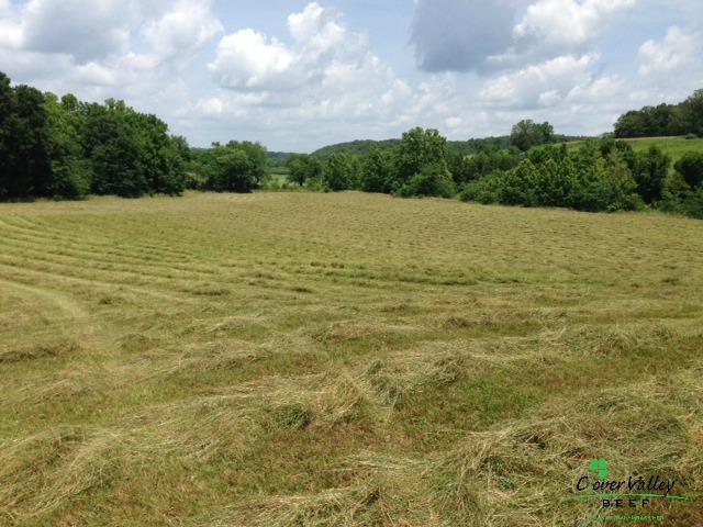 clover valley beef hay