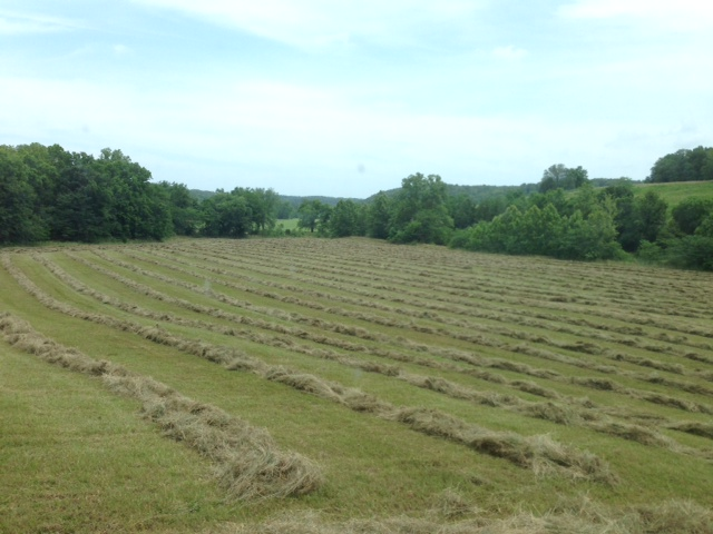 Hay Windrows - Clover Meadows Beef Grass Fed Beef - St Louis Missouri