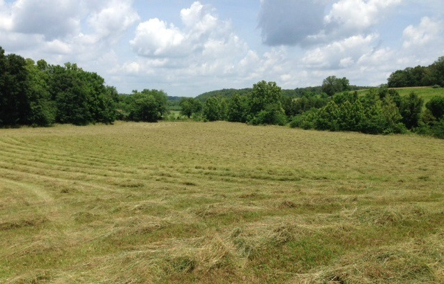 Cut Grass and Hay - Clover Meadows Beef Grass Fed Beef - St Louis Missouri