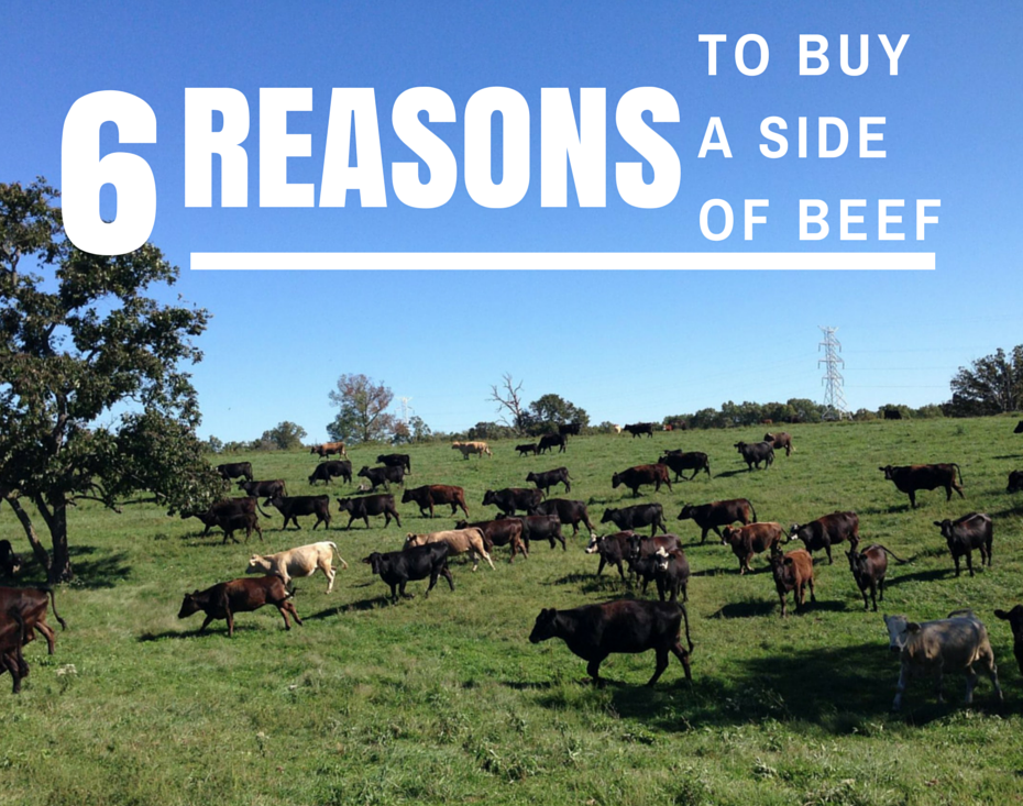 Here are 6 of the most popular reasons why our customers buy a side of beef.