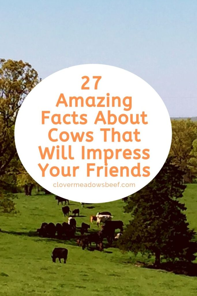 27 Amazing Facts About Cows That Will Impress Your Friends | Clover Meadows Beef Grass Fed Beef | St. Louis, Missouri