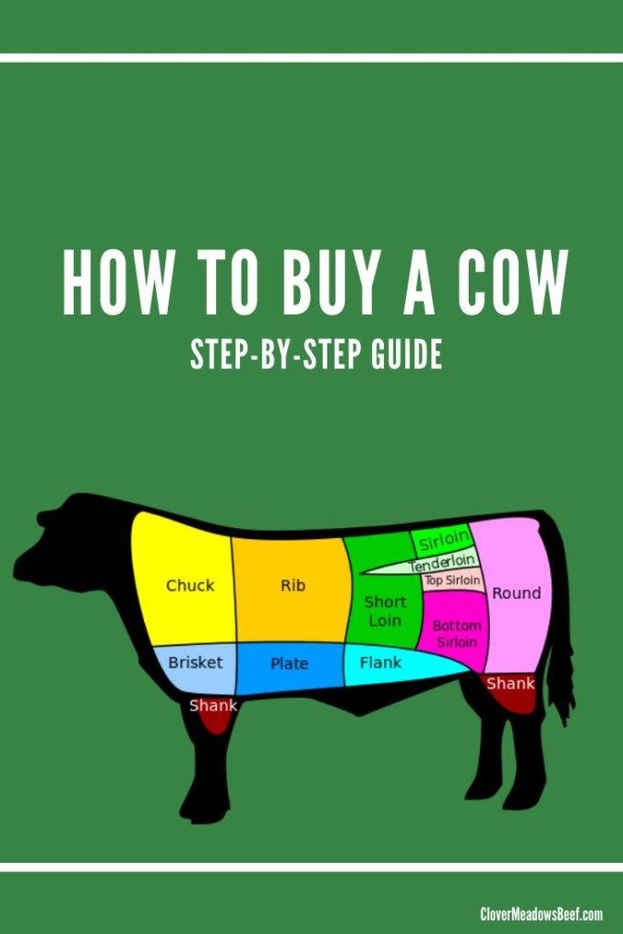 buy a cow - grass fed beef st. louis missouri