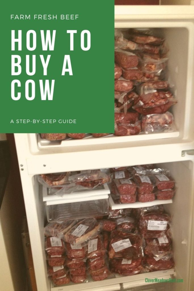 How to buy a cow - A step-by-step guide | Clover Meadows Beef Grass Fed Beef, St. Louis, Missouri