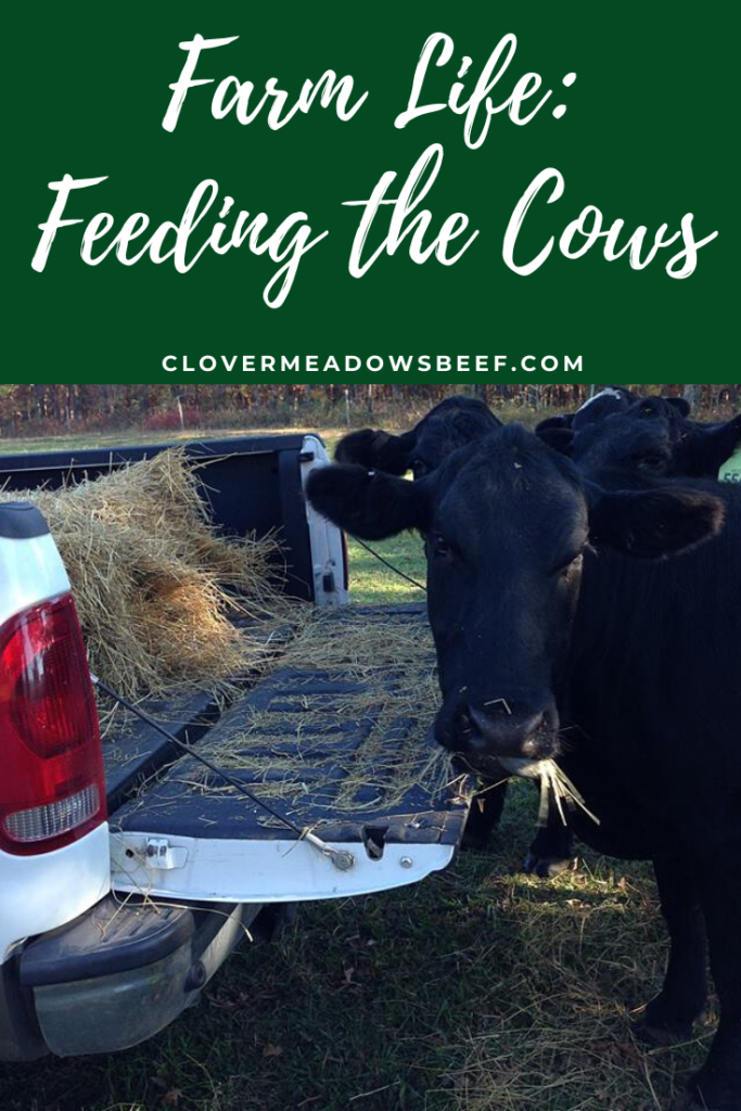 feed cows