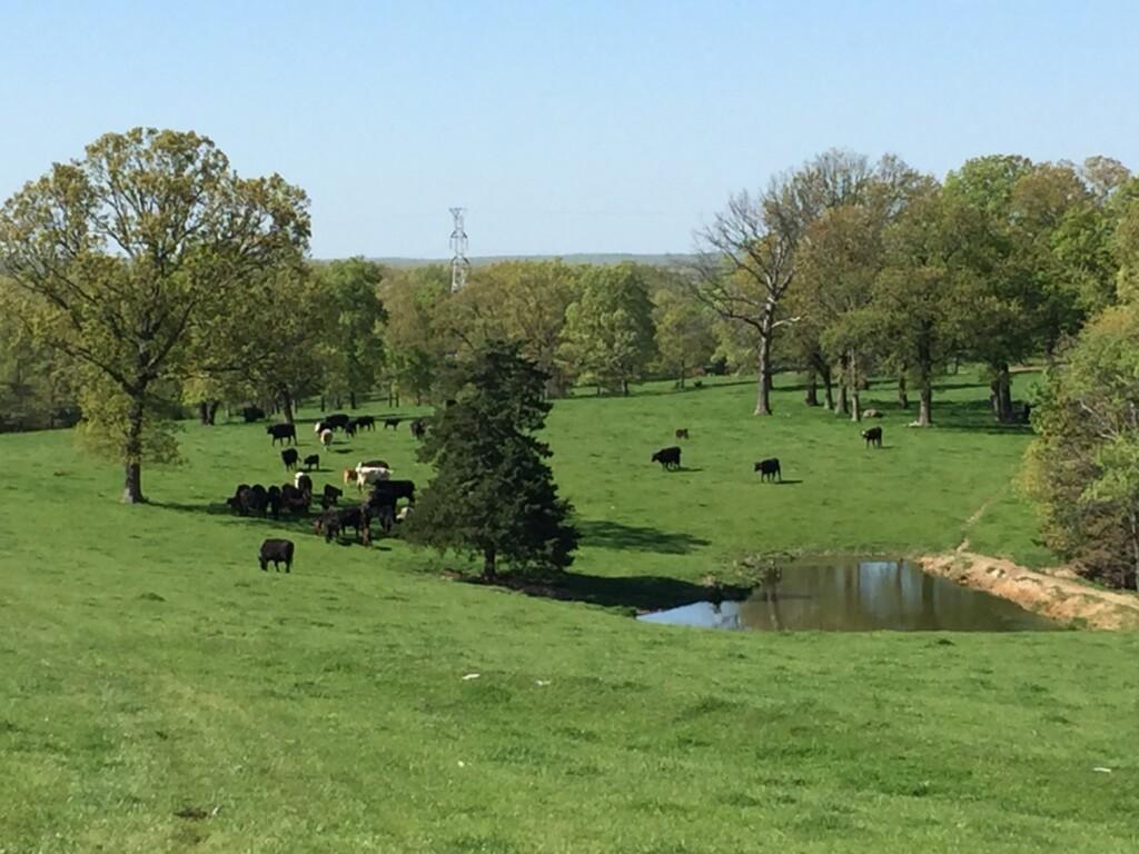 clover-meadows-beef-_-0500-image-2048x1536